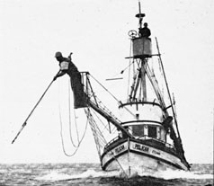 photo of Swordfishing